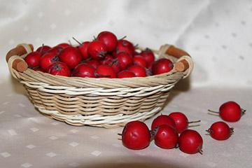 ягода лечебная
