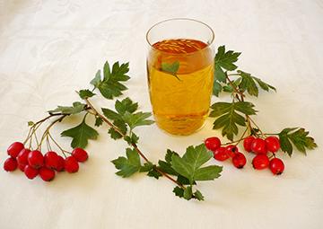 Чай из листьев боярышника