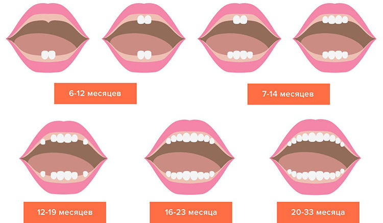 как режутся зубы